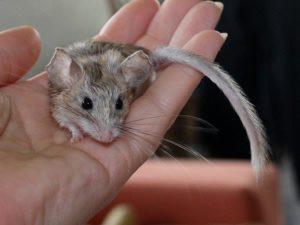 Mäuseasyl-Das Original