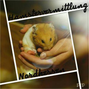 Hamstervermittlung Nordhessen