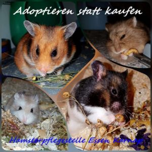 Hamsterpflegestelle Essen Karnap