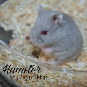 Hamster-Rettung mit Herz Werl